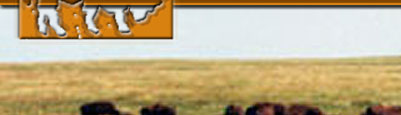buffalo hunts, bison hunts, hunting buffalo south dakota, south dakota buffalo hunts, hunting guides, hunting outfitters